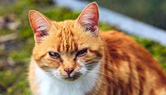 Is Your Buyer Trapped In a Cat Body?