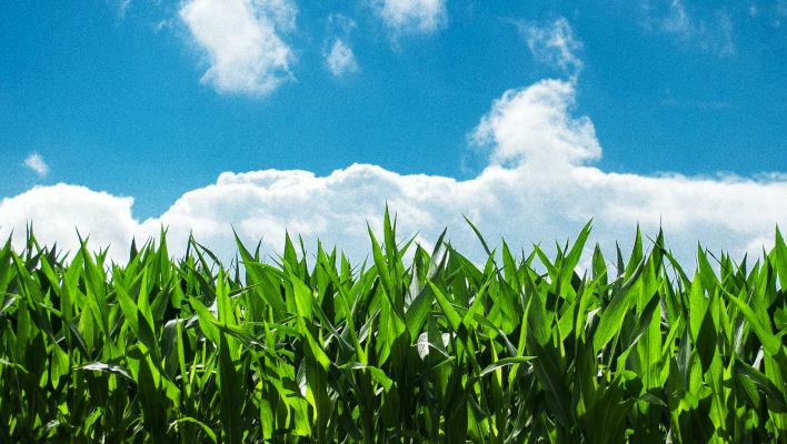 Marketing lessons from an Idaho corn farm boy.